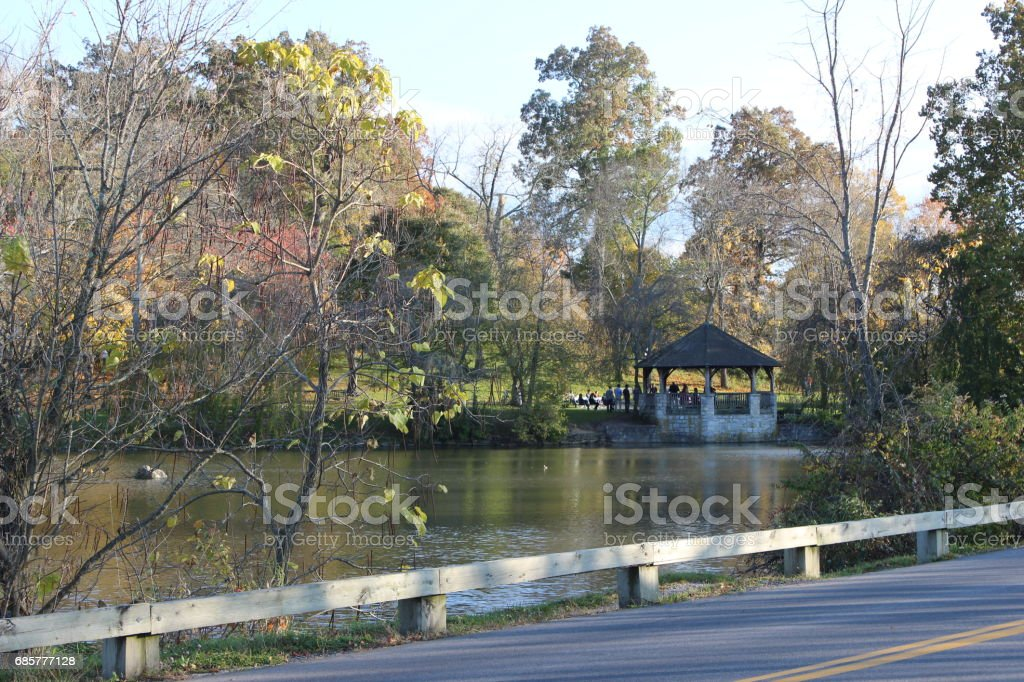 Duck Pond 7 royalty-free stock photo