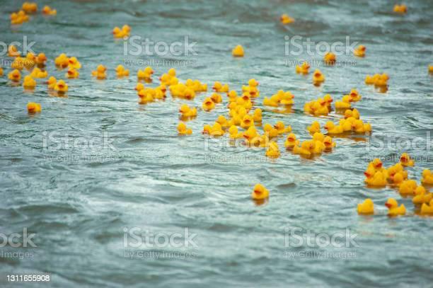 Photo of Duck race
