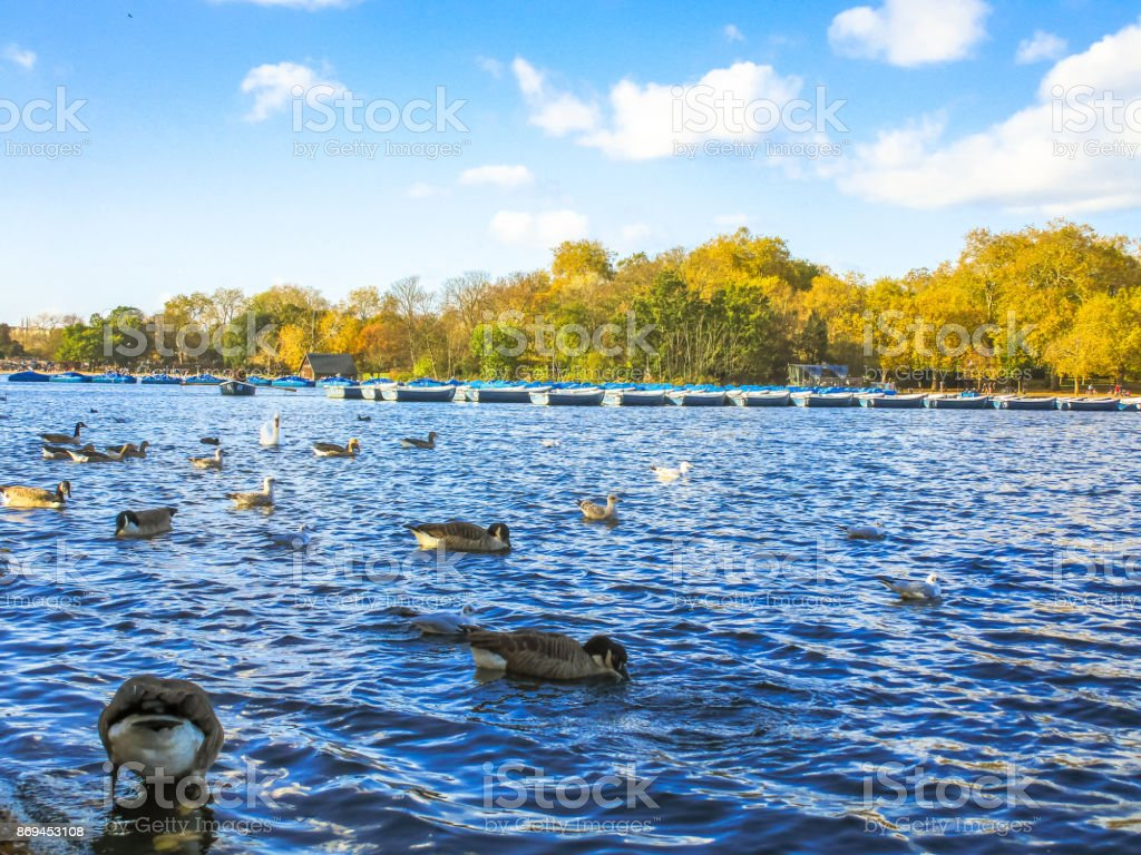 Ducks and boats on a lake stock photo