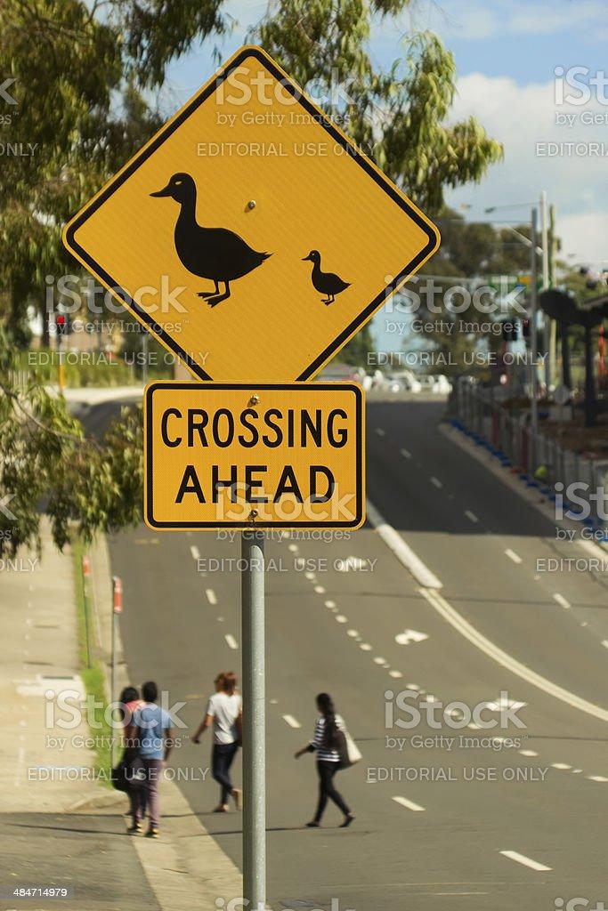 Ducks Crossing Ahead stock photo