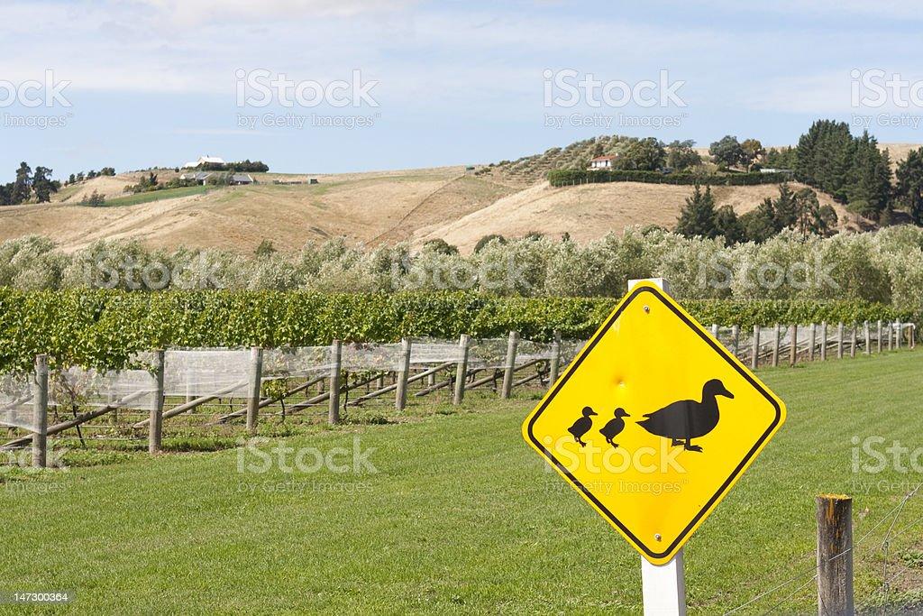Ducks crossing royalty-free stock photo
