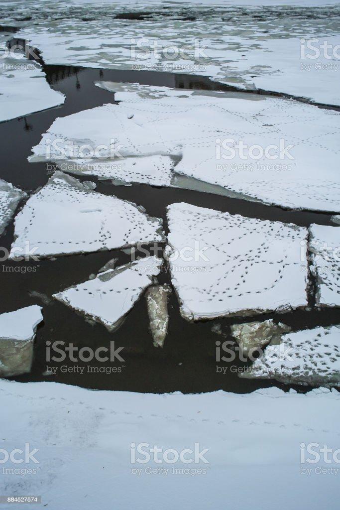 Ducks footprint on the ice floe stock photo