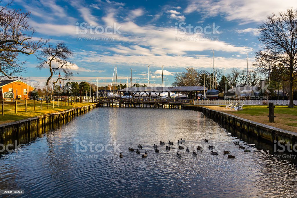 Ducks in a creek, in St. Michael's, Maryland. stock photo