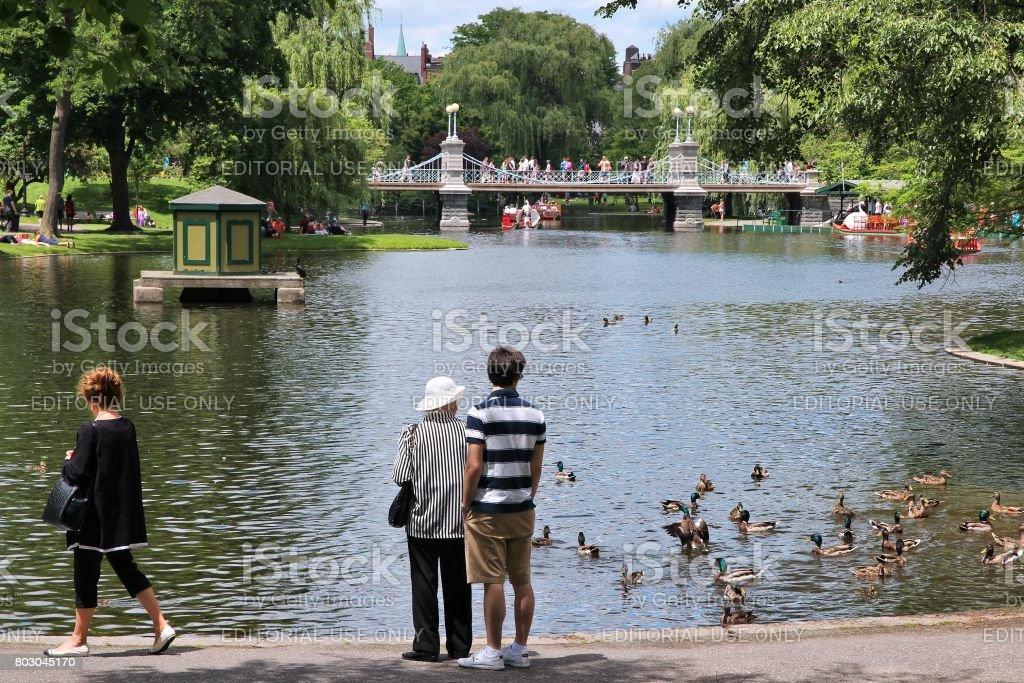 Ducks in Boston Common stock photo