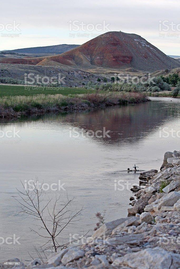 Ducks in preflight on the Bighorn River in Thermopolis Wyoming stock photo