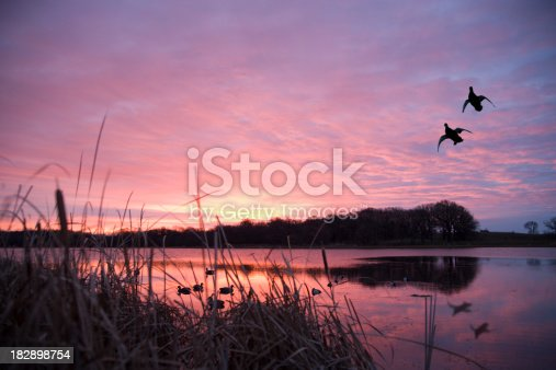 The decoys attract a pair of mallards on a calm lake as the sunrises. Please see my portfolio for more outdoors related images.
