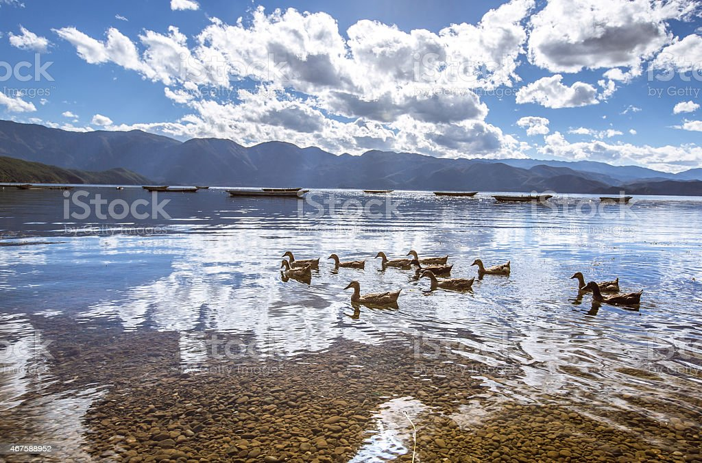 Ducks Lugu lake stock photo