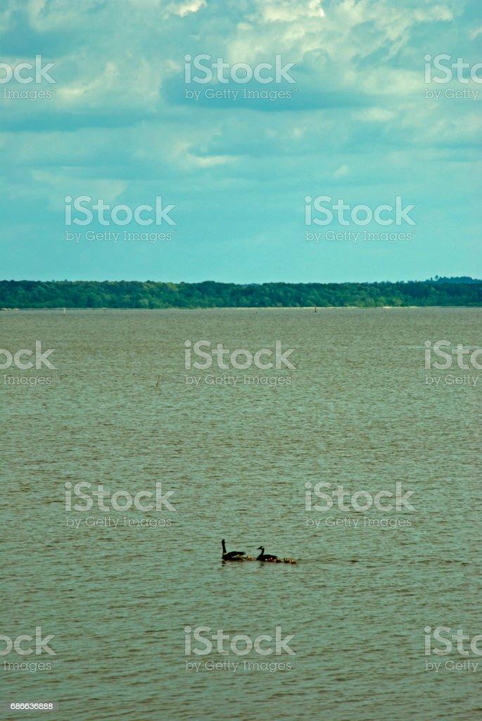 Enten, Natchez Trace, Mississippi Lizenzfreies stock-foto