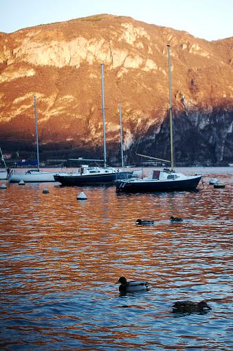 istock Ducks on Lake Como 1217171844
