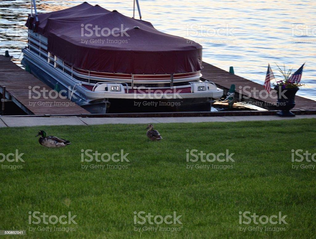 Ducks en el muelle - foto de stock