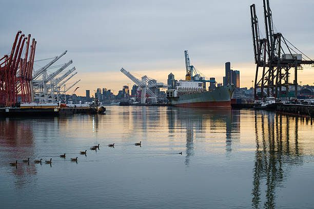 Ducks on the Duwamish stock photo