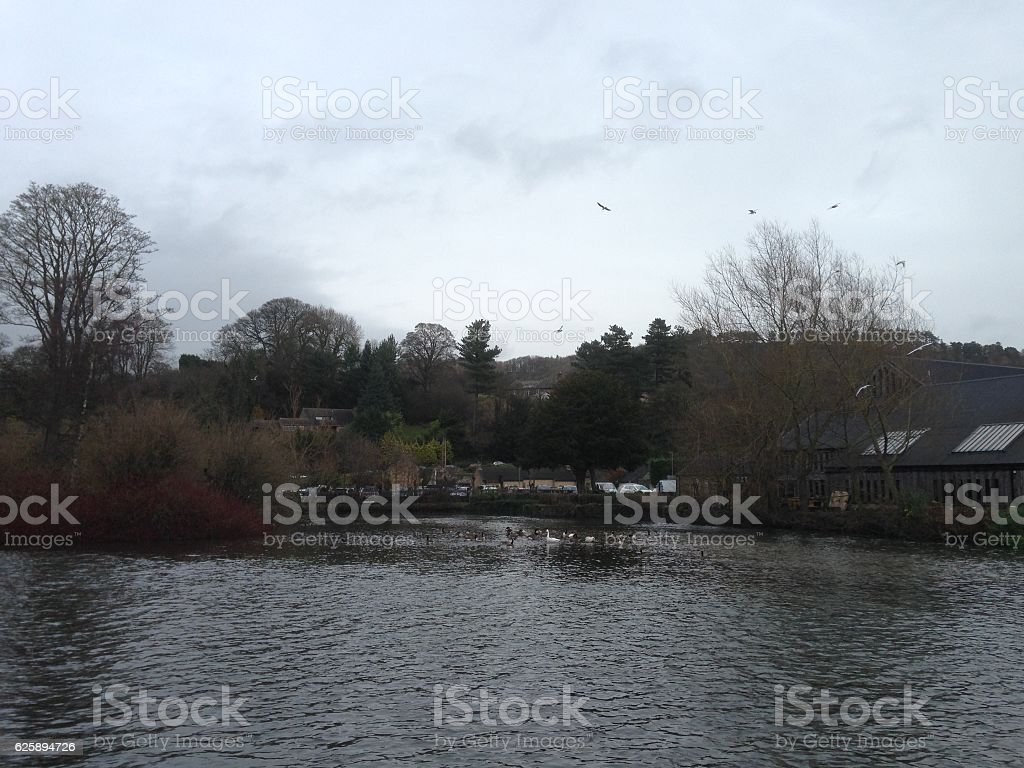 Ducks on the river of British Countryside stock photo