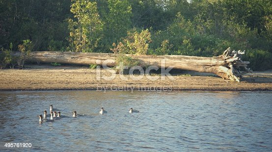 Adirondack Mountain Park in upstate New York, home to Schroon Lake. It has pristine, clear water with beautiful majestic mountain views. Photograph of beach shore, blue water and ducks in water.