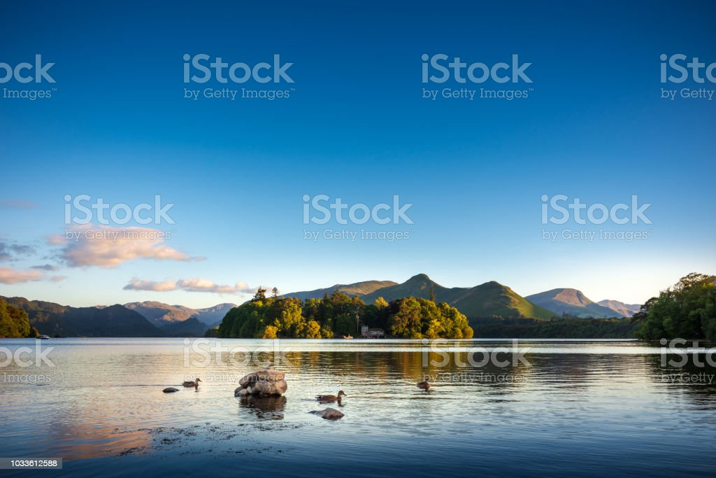 Ducks swimming on Lake Derwentwater near Keswick, England Keswick is a beautiful town located in the English Lake District, where the lush green hills meet the tranquil lake of Derwentwater. Shot in Summer during the late afternoon. Cat Bells Fell can be seen in the background. Awe Stock Photo