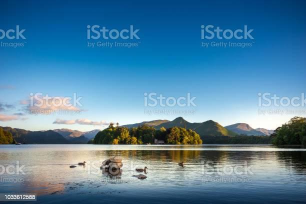 Ducks Swimming On Lake Derwentwater Near Keswick England Stock Photo - Download Image Now