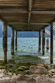 from under a wooden jetty we can see ducks bathing in a lake with crystal clear and turquoise water