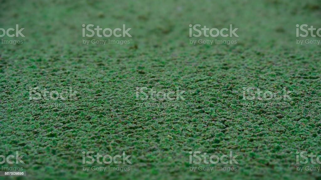 Duckweed close up stock photo