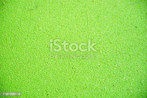 Green algae, Green water plants, nature backgrund