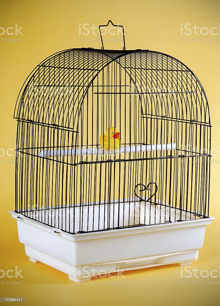 ducky behind bars royalty-free stock photo
