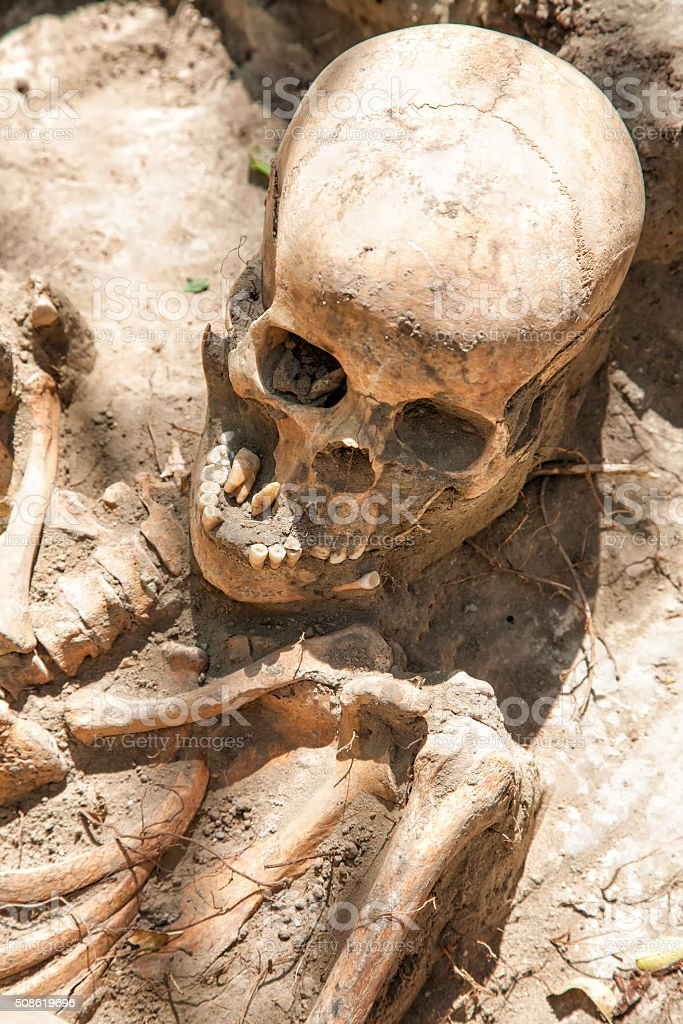 Dug up the skull stock photo