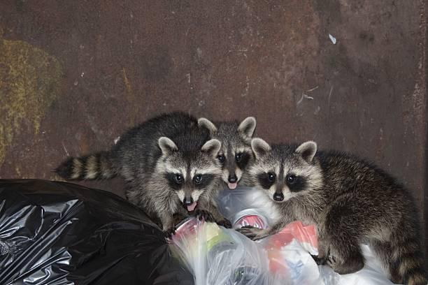 Plongeurs de la benne à ordures - Photo