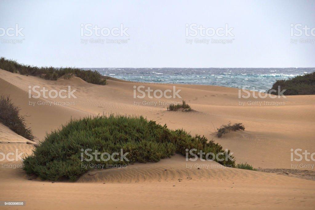 Dunas de Maspalomas - Gran Canaria - Spain - at storm - gray sea stock photo