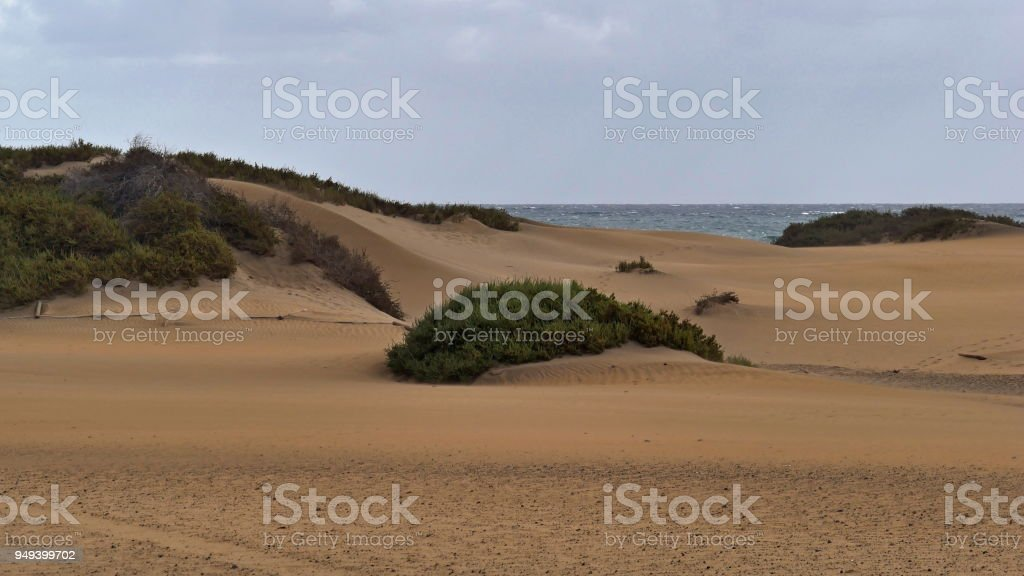 Dunas de Maspalomas - Gran Canaria - Spain - at storm - small dune with plants stock photo