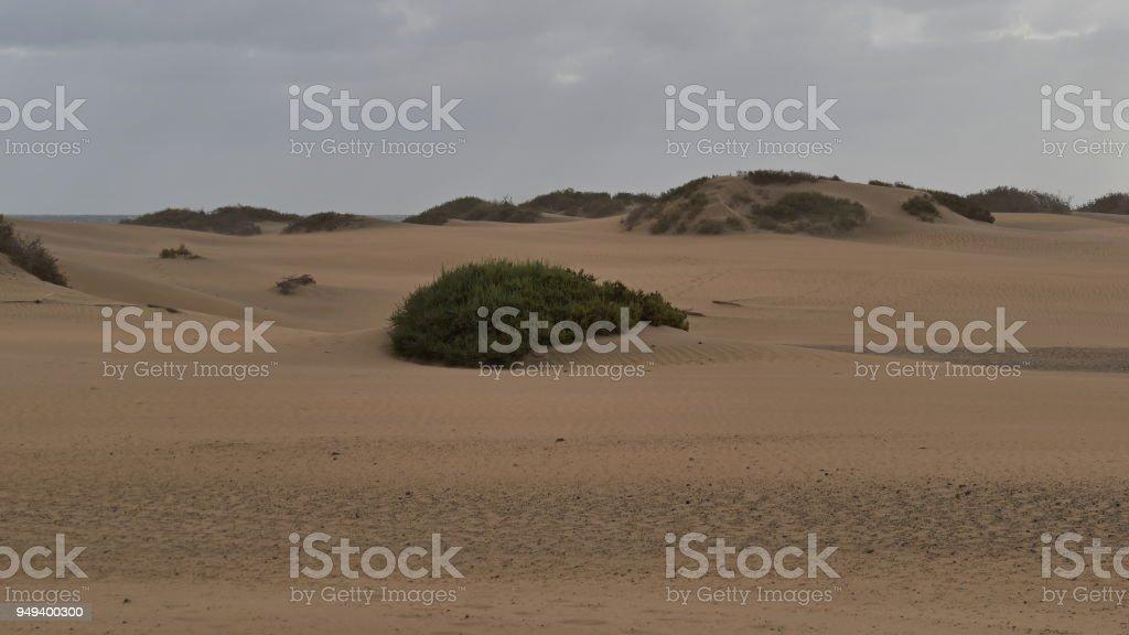 Dunas de Maspalomas - Gran Canaria - Spain - at storm - small overgrown dune stock photo