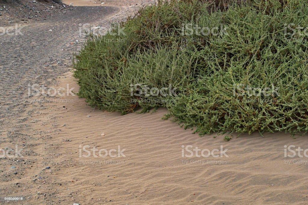 Dunas de Maspalomas - Gran Canaria - Spain - driveway on the edge of a dune stock photo