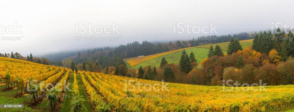 Dundee Oregon Weingut Weingut Herbst Saison einen nebligen Morgen Pano Blick – Foto