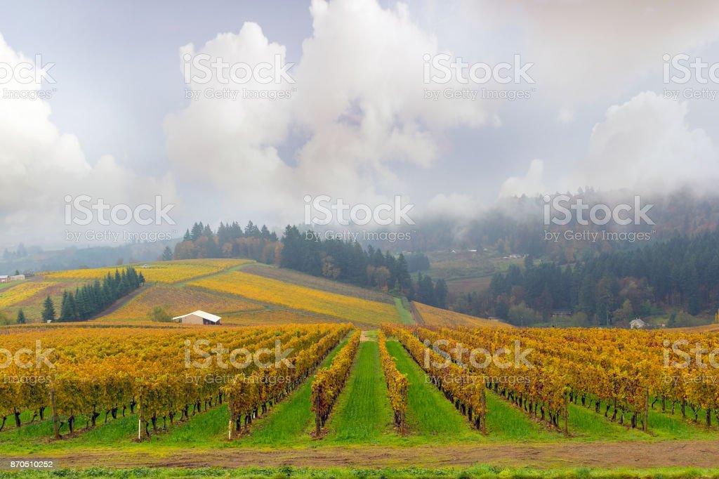 Dundee Oregon Weingut Weingut in Herbst Saison in einem nebligen Morgen – Foto