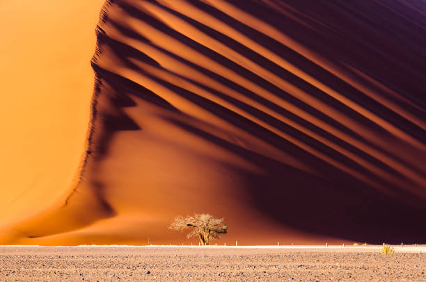 Dune 45, a 170m high dune made from red sand, Sossusvlei, Namib-Naukluft National Park, Namibia – Foto