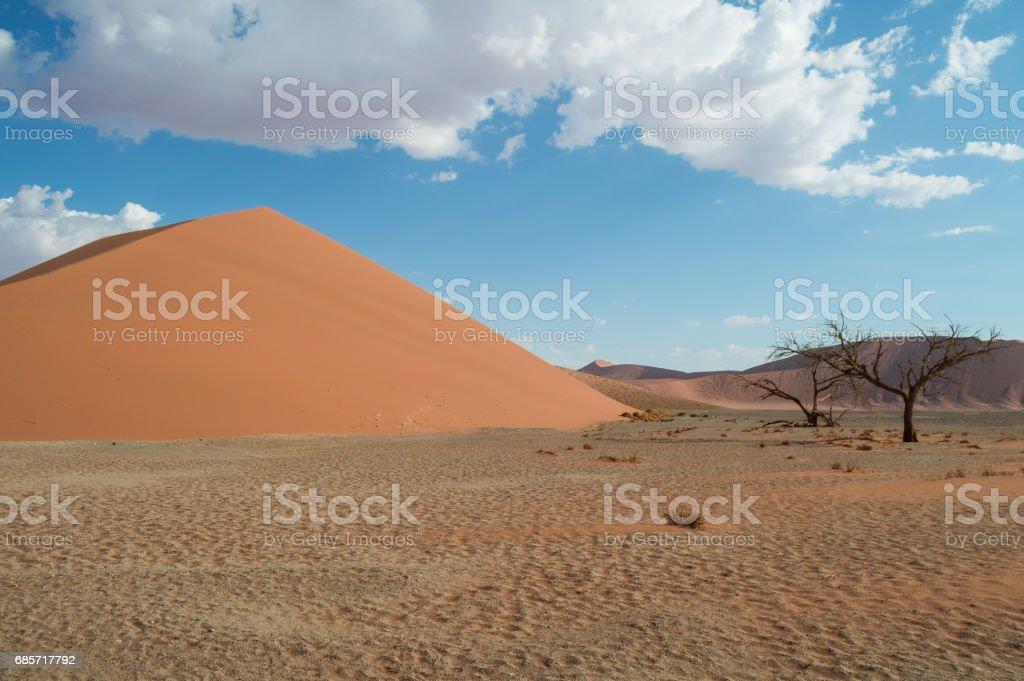 デューン 45、砂漠の風景、ソーサス フライ、ナミビア ロイヤリティフリーストックフォト