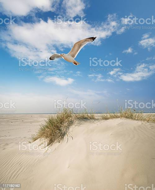 Photo of Dune gras at the beach