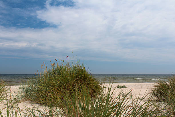 dune gras on the beach at öland, sweden - sand dune sweden bildbanksfoton och bilder