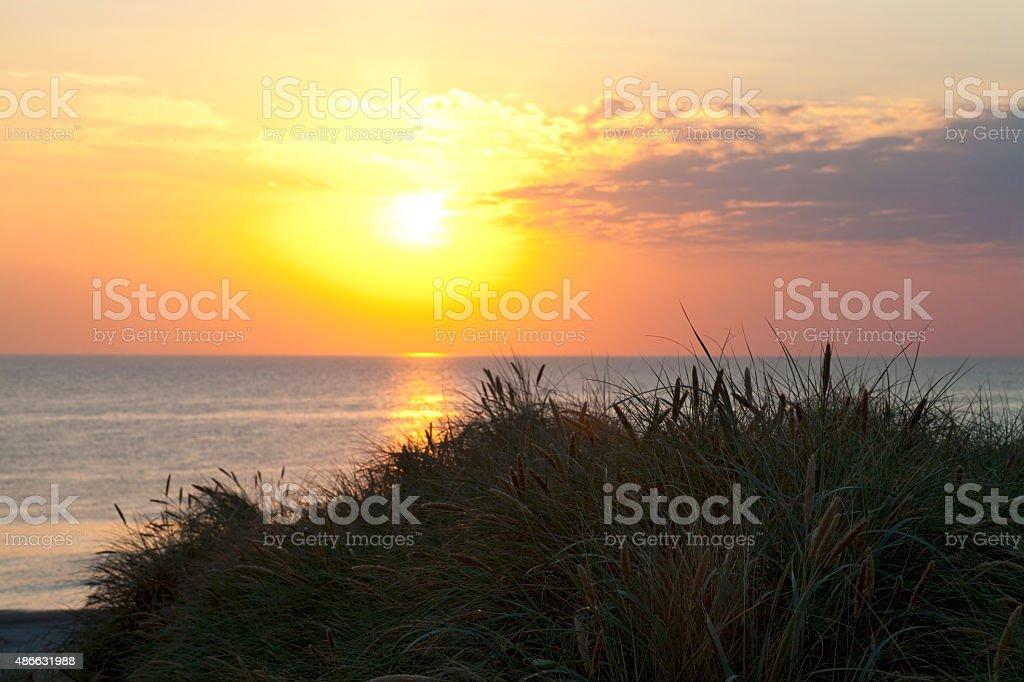 Dune Grass in Silhouette stock photo
