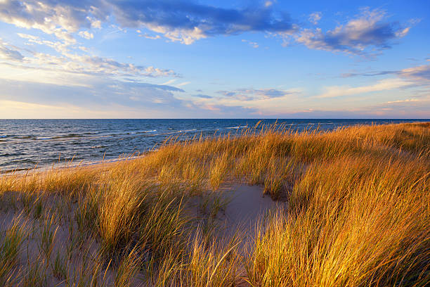 dune grass on lake michigan - lake michigan stock pictures, royalty-free photos & images