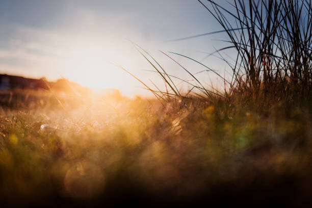 Dünngras am Strand – Foto