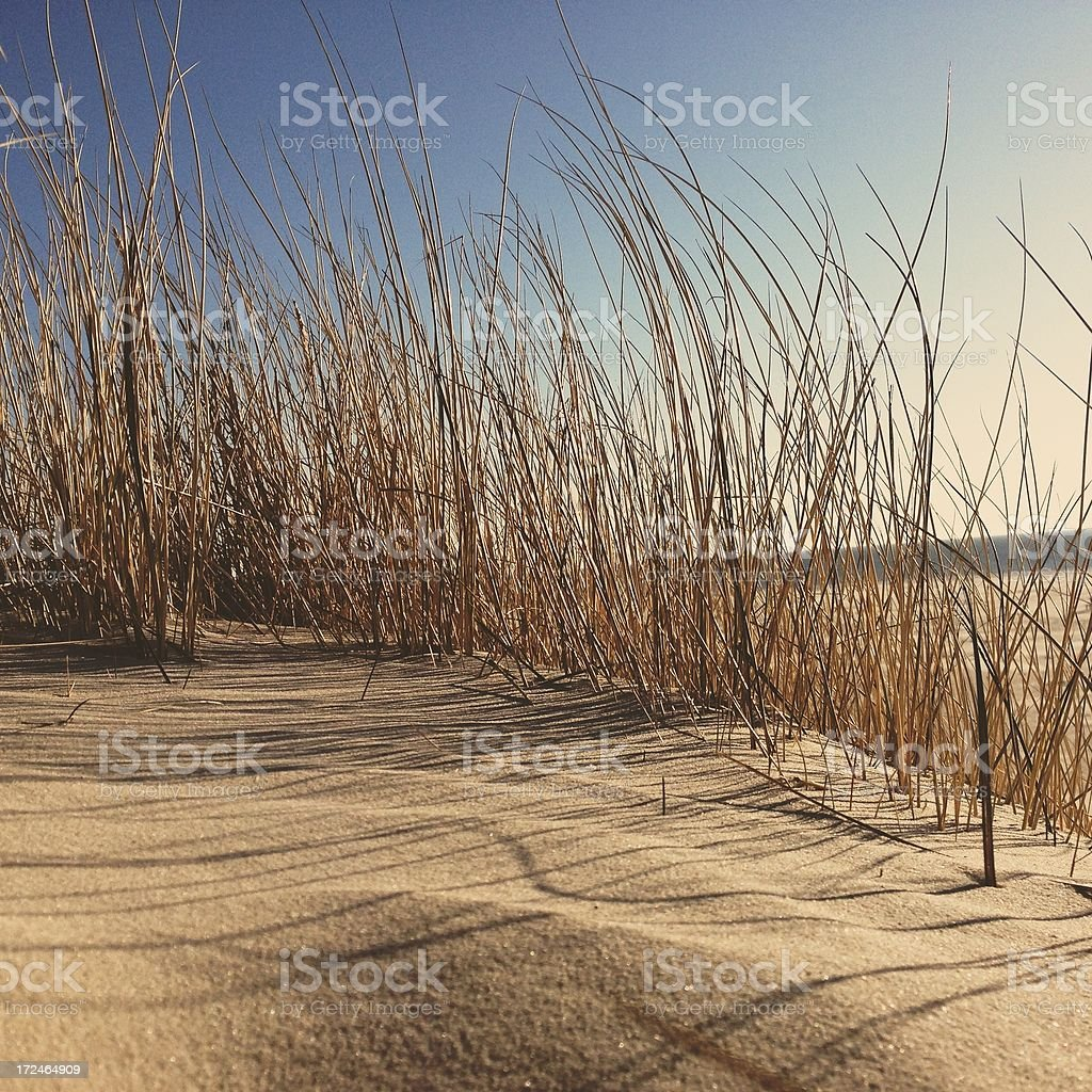 Dune grass on the beach royalty-free stock photo