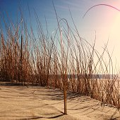 Dune grass on the beach. Shot was taken with an iPhone.