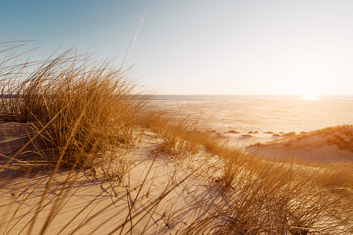 Dune grass on the beach