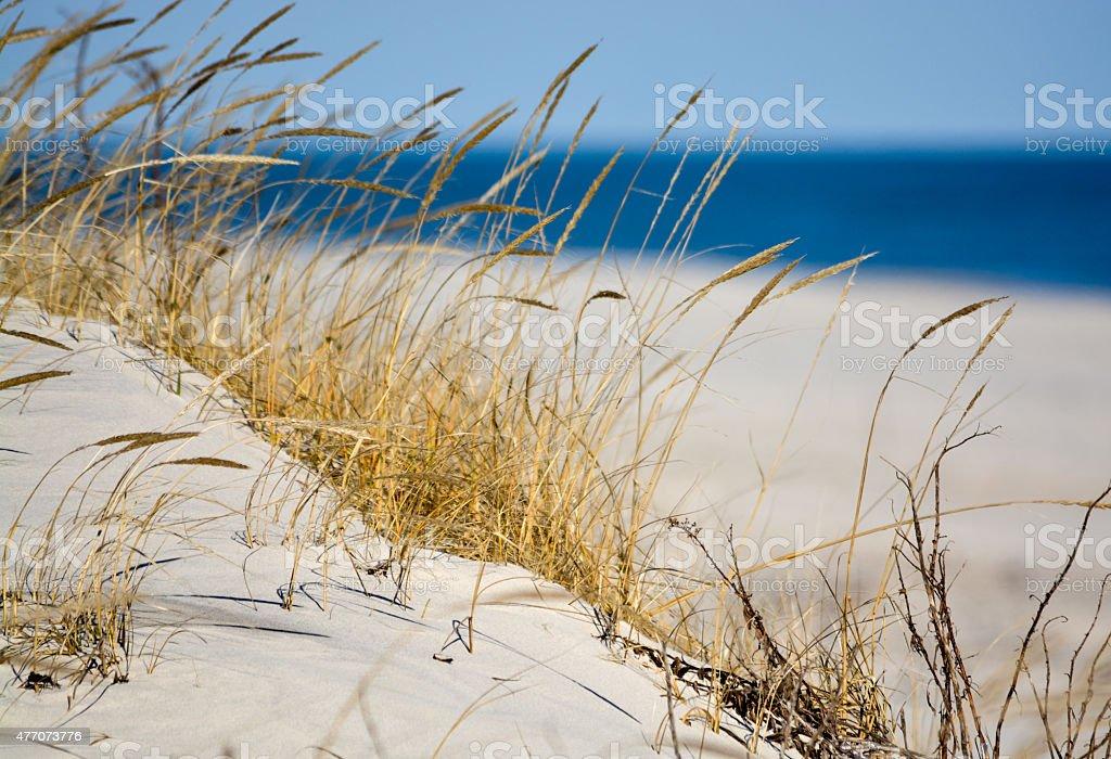 Dune Grass stock photo