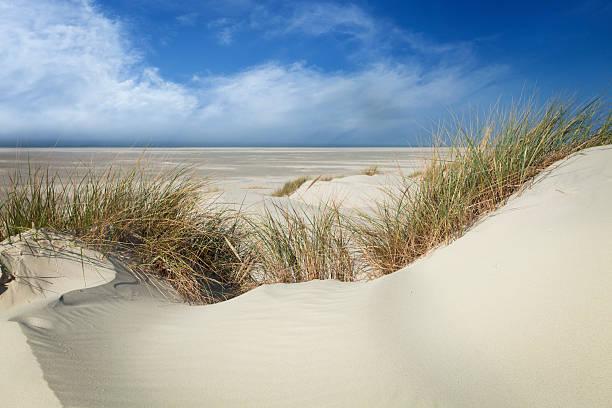 dune landschaft-amrum/deutschland - sylt urlaub stock-fotos und bilder
