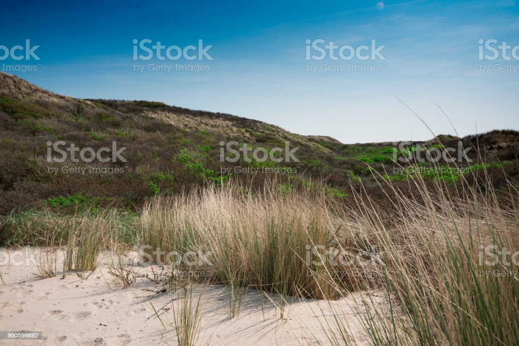 Dune landscape of Burgh Haamstede, The Netherlands stock photo