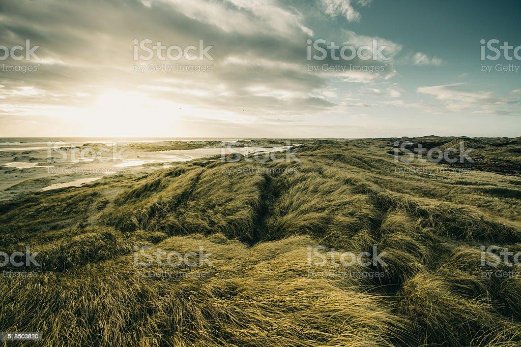 Dune Landschaft – Foto