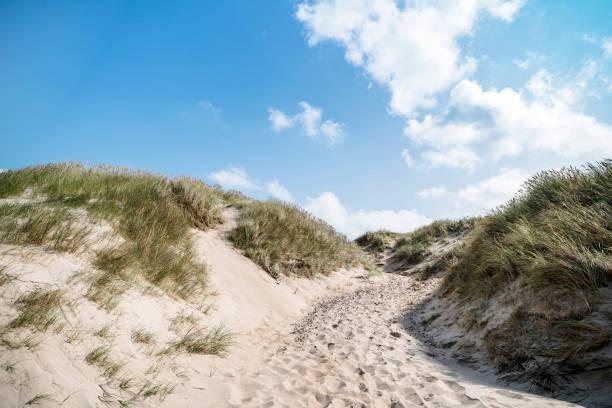 dune på en strand med lyme grass - sand dune sweden bildbanksfoton och bilder