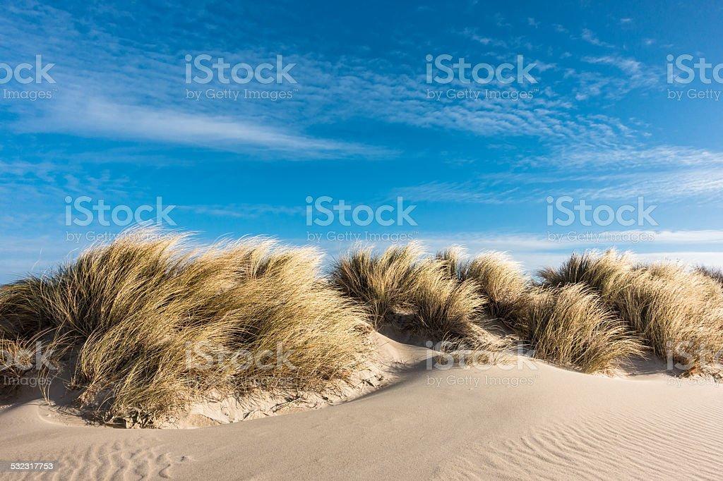 Dünen am Ostsee – Foto