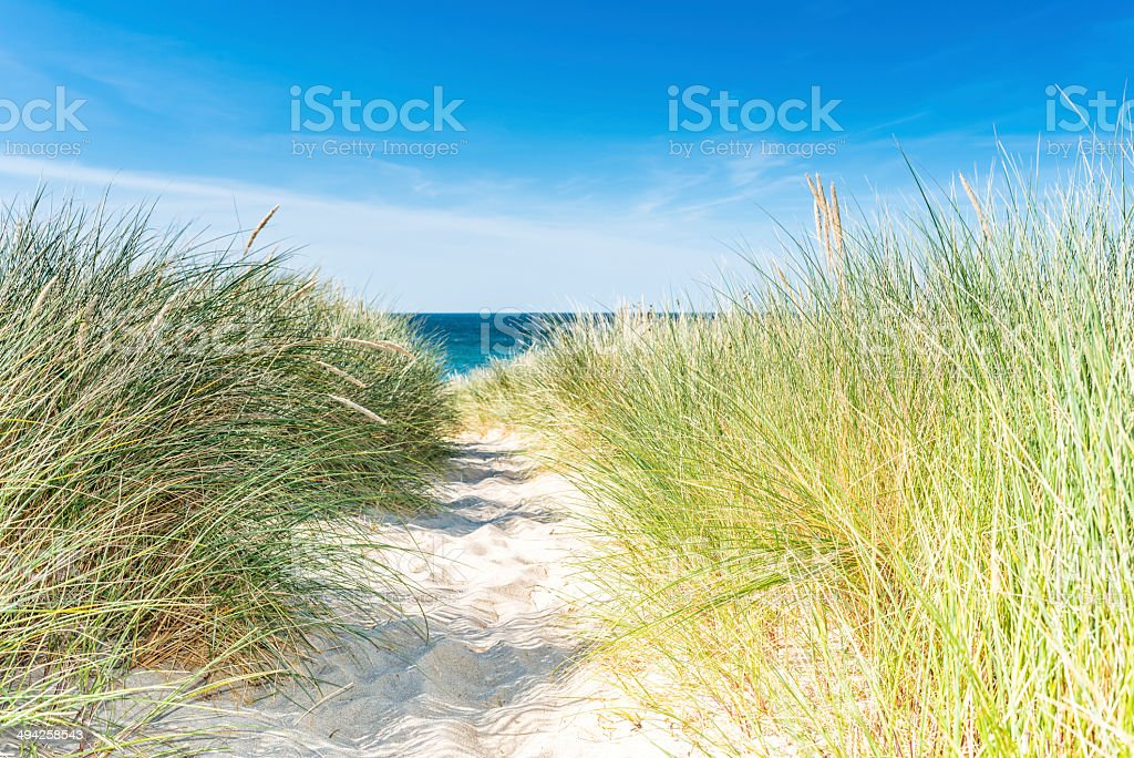Dune with beach grass close-up horizontal. stock photo