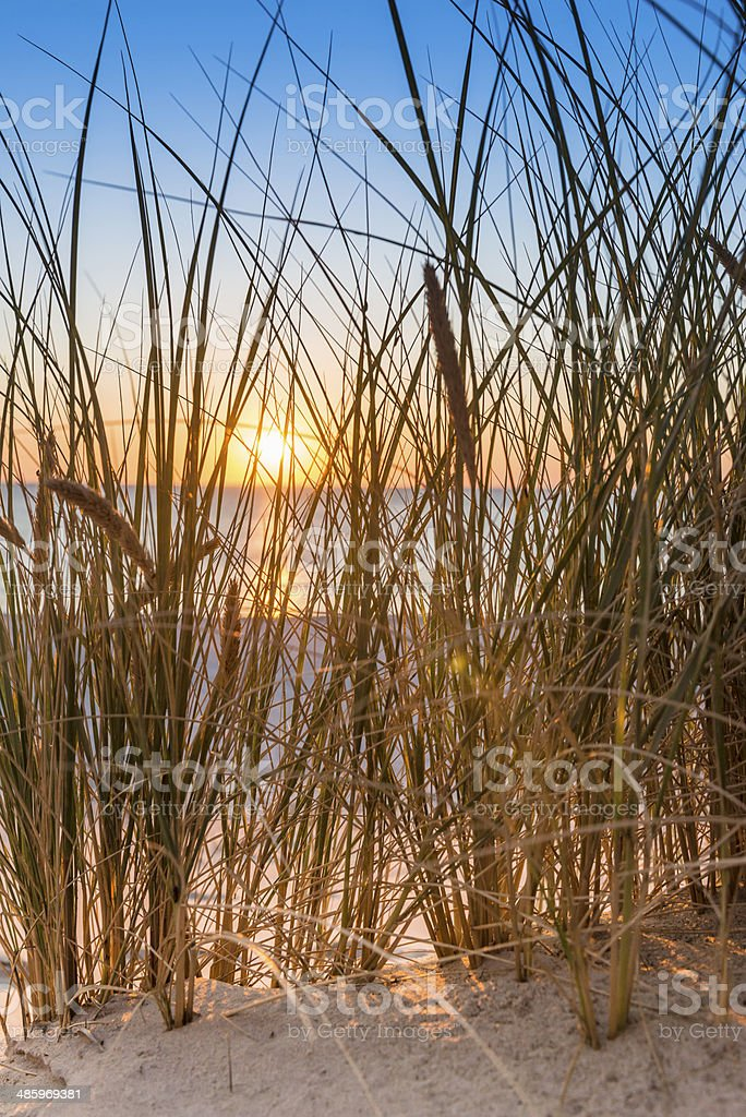 Dune with beach grass close-up. stock photo