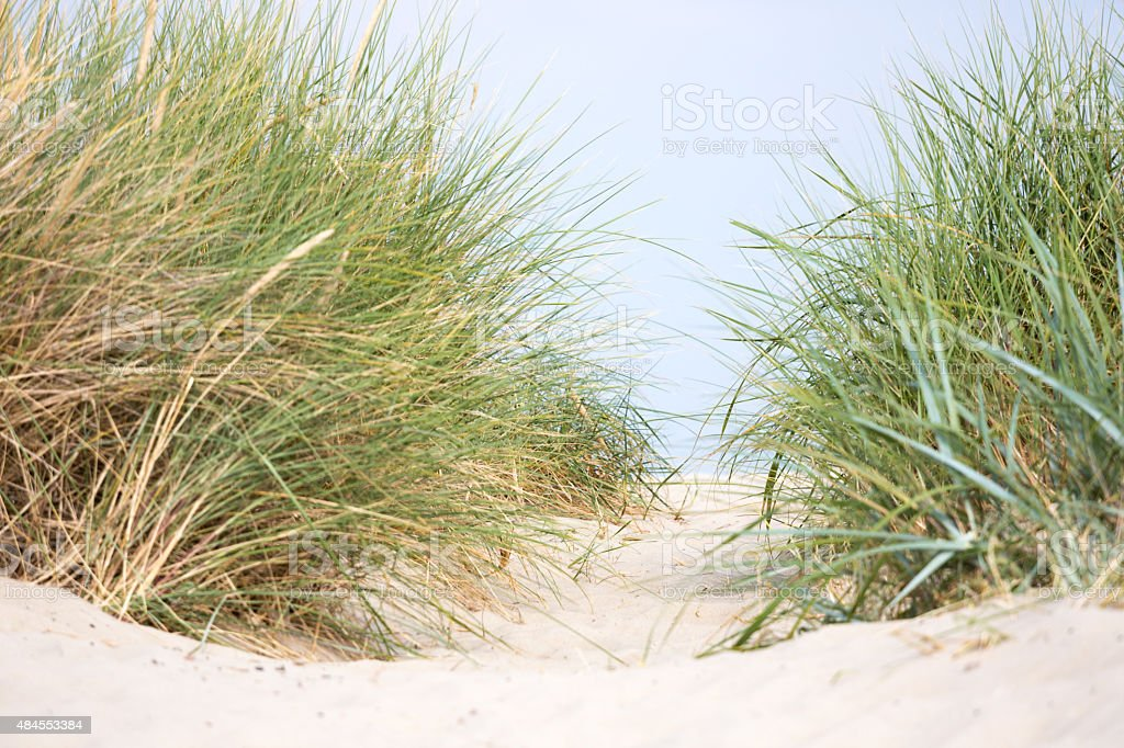 Dune with marram grass, North Sea in the distance stock photo